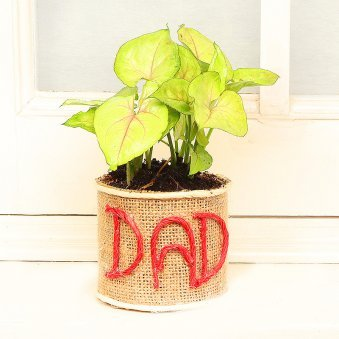 Jute Wrapped Syngonium in Glass Vase for Dad