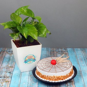 Money Plant with Butterscotch Cake Combo for Mom