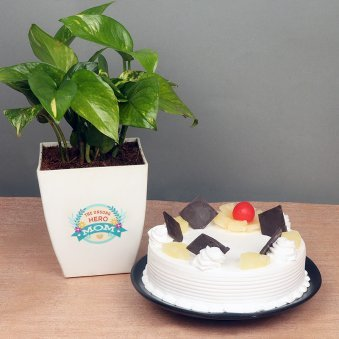 Money Plant with Pineapple Cake Combo for Mom