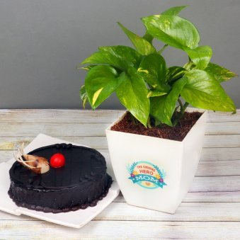 Money Plant with Chocolate Truffle Cake Combo for Mom