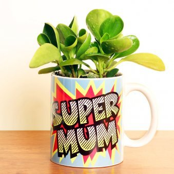 Peperomia Plant in a Printed Mug - A Gift for Mom