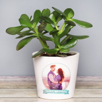 Personalised Crassula Ovata Plant for Birthday