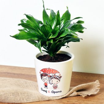Personalised Love Dracaena Plant