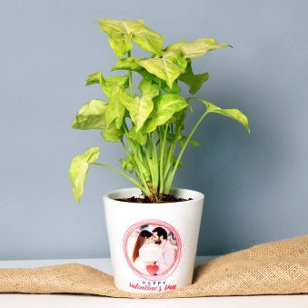 Personalised Syngonium Plant for Valentines Day