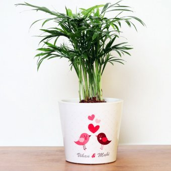 Personalised Love Areca Palm Plant