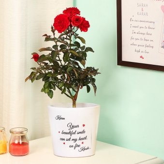 A Personalised Rose Plant