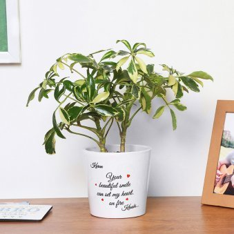 Personalised Love Themed Schefflera Plant