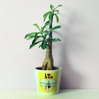 Adenium Plant for Dad in Personalised Vase