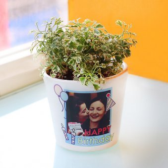 Personalized Aralia Plant