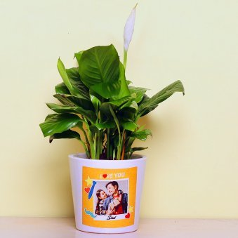 Spathiphyllum Plant in Personalised Vase for Dad
