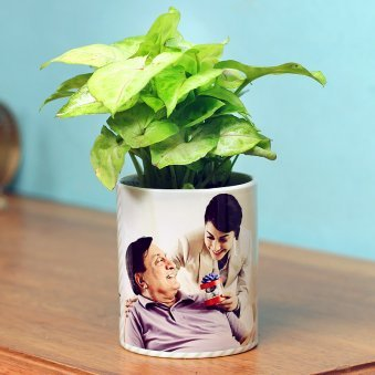 Syngonium Plant in Personalised Vase