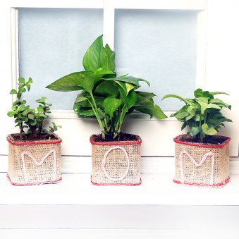 Good Luck Plant Combo for Mom - An Indoor Plant Gift