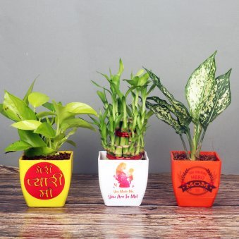Foliage and Air Purifying Plants Combo for Mom