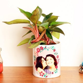 Red Philodendron Plant in a Personalised Mug - A Plant Gift for Mother