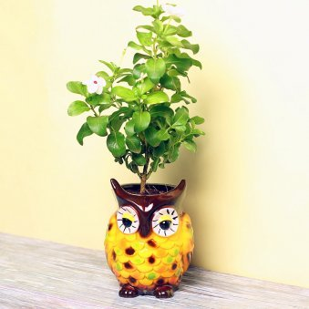 Rose Periwinkle Plant in Owl Shaped Vase