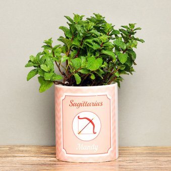 Personalised Mint Plant for Sagittarius People