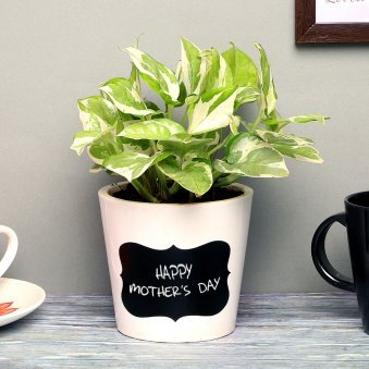 White Pothos Plant in Mothers Day Printed Vase