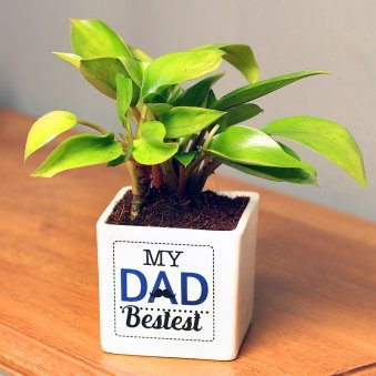 Red Philodendron Plant in White Vase for Dad