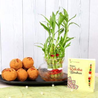 Rakhi with Two Layered Lucky Bamboo and Half Kg Besan Laddu