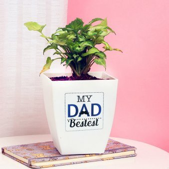 Syngonium Plant in White Vase for Dad