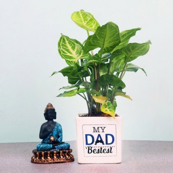 Syngonium Plant in White Vase for Daddy