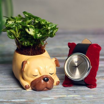 Syngonium Dwarf Plant and Watch Combo for Dad