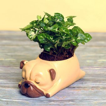 Syngonium Dwarf Plant in Dog Shaped Vase