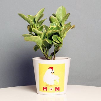 Peperomia Plant in a Vase for Mom