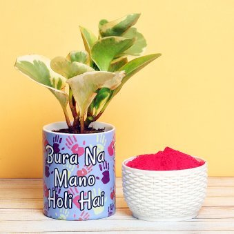 Peperomia Plant with Gulal Holi Combo