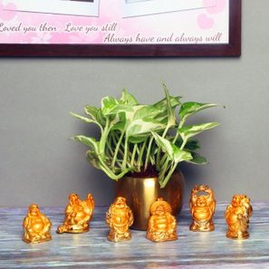 White Pothos Plant with Buddha Statues