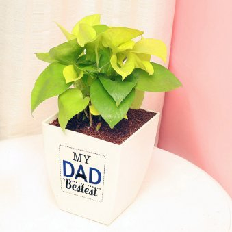 Money Plant in White Vase for Dad