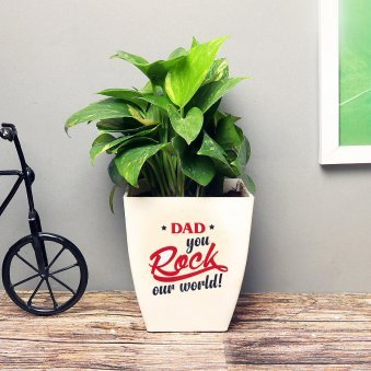 Money Plant in White Vase for Papa